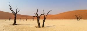 Afrika - Dürre